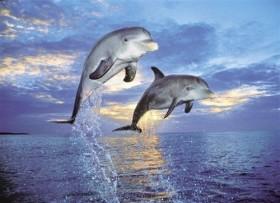 Clementoni Dolphins (30139)