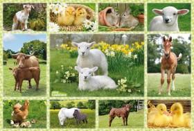 Schmidt Spiele Tierkinder auf dem Bauernhof (56194)