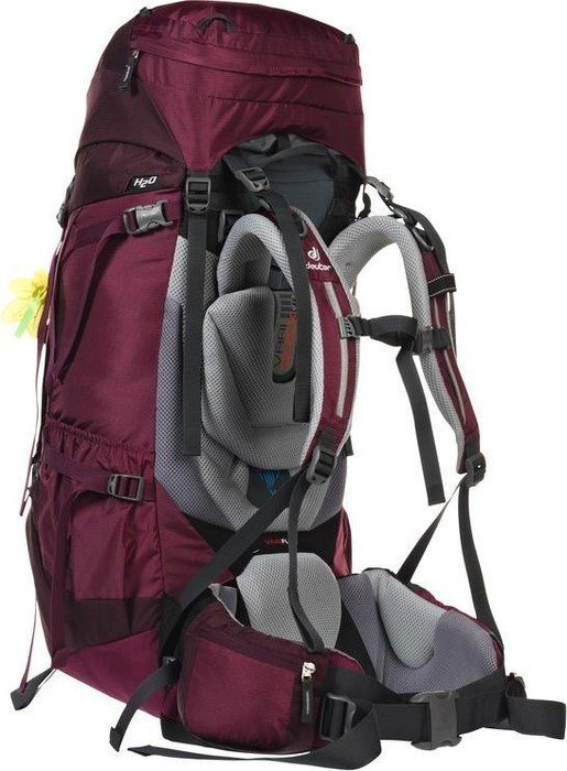Deuter Aircontact 50+10 SL blackberry/aubergine (ladies) (3320216-5530)