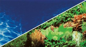 Hobby Fotorückwand Pflanzen 8 & Marin Blue, 60x30cm (31137)