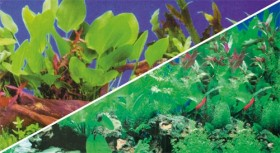 Hobby Fotorückwand Pflanzen 1 & Pflanzen 5, 120x50cm (31126)