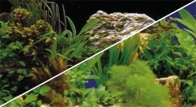 Hobby Fotorückwand Pflanzen 2 & Pflanzen 7, 120x50cm (31128)