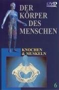 Der Körper des Menschen Vol. 6: Knochen und Muskeln (DVD)