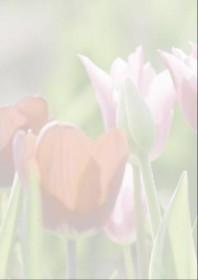 Sigel Motiv Papier A4, Spring fever, 90g/m² (DP462)
