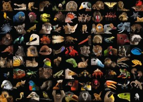 Ravensburger Puzzle 99 atemberaubende Tiere (15983)