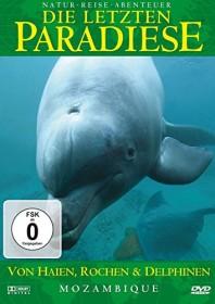 Die letzten Paradiese Vol. 26: Mosambik - Von Haien, Rochen und Delfinen