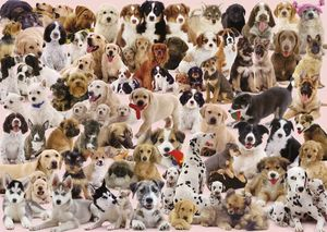 Ravensburger puzzle Dog's Galore (15633)